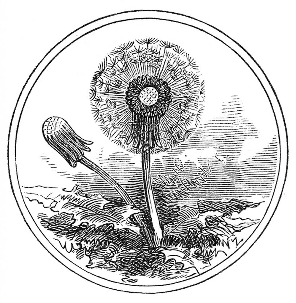 Vintage Dandelion Clip Art