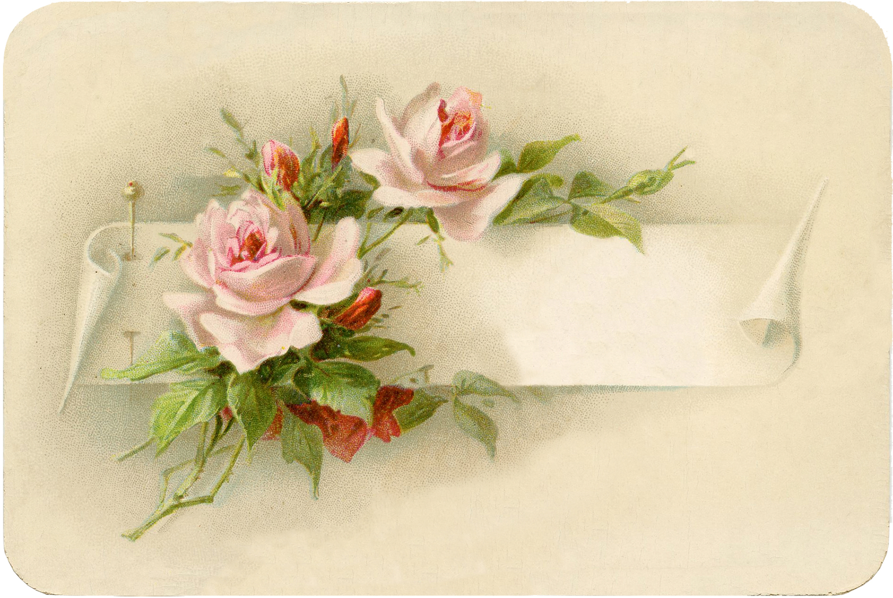 Free printable border designs for paper - Exceptionally Beautiful Vintage Roses With Pin Image