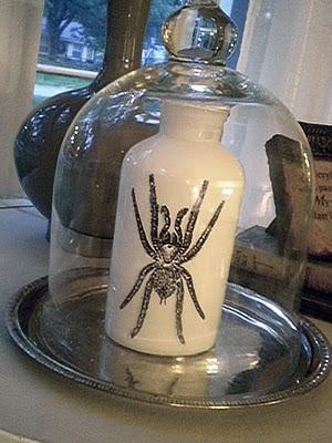 halloween spider bottle