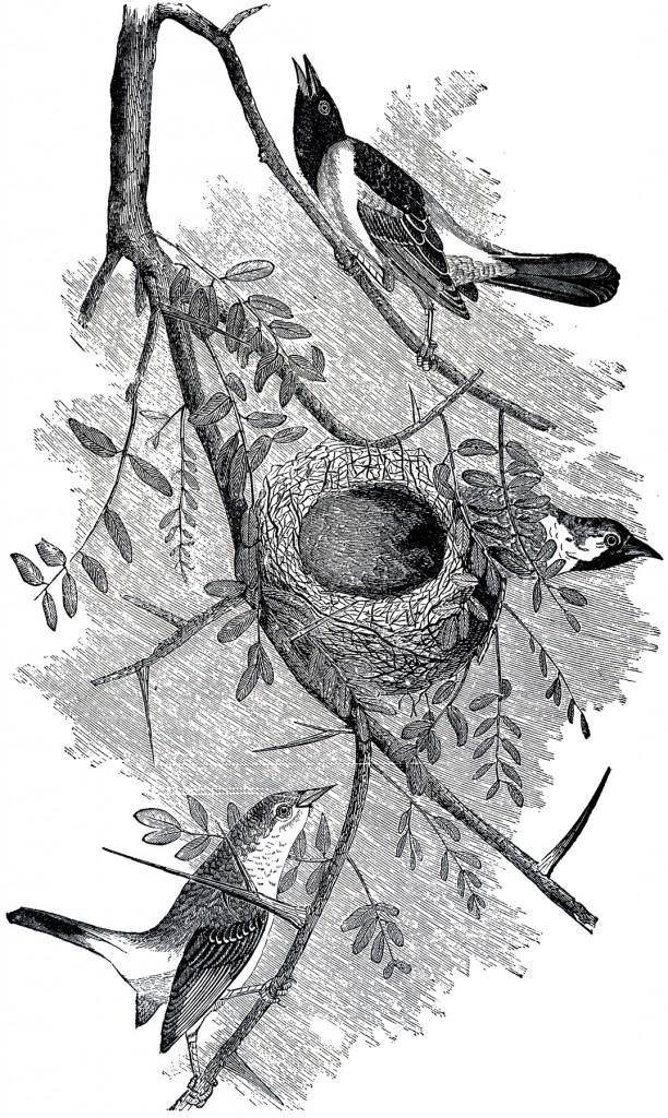 Birds Nest Engraving