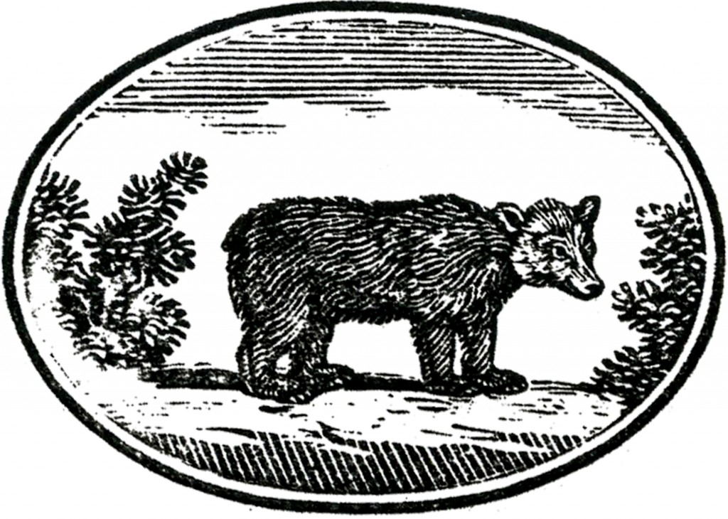 Primitive Bear Image