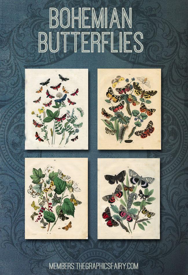 Bohemian Butterflies Collection