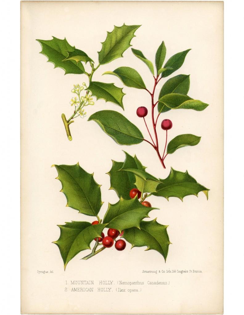11 - Vintage Holly