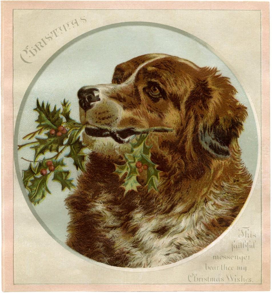 Christmas Dog Image
