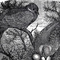 Vintage Birds Nesting Image