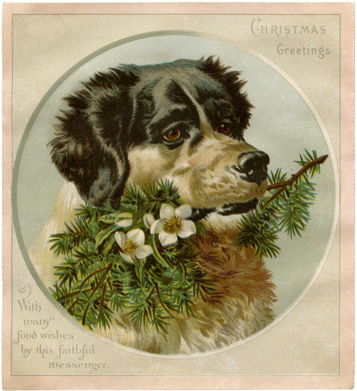 Dog christmas cards | Etsy