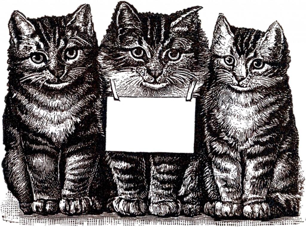 Free Digital Cats Download