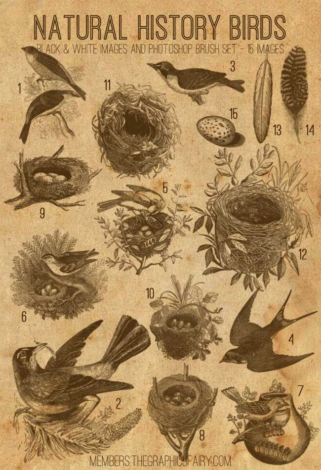 Natural History Birds and Nests