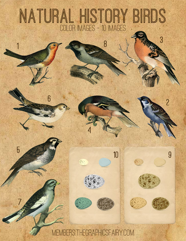 Natural History Birds Images