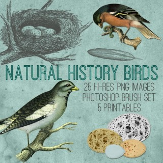 Natural History Birds Kit!  ~ Graphics Fairy Premium