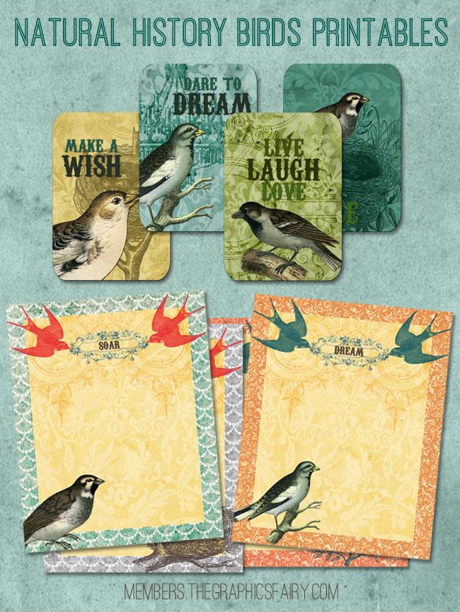 Natural History Birds Printables