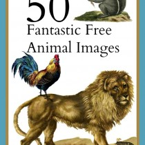 50 free animals images graphicsfairy