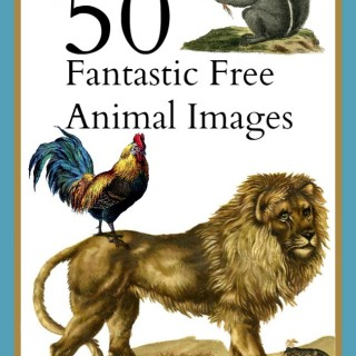 50 Fantastic Animal Images!