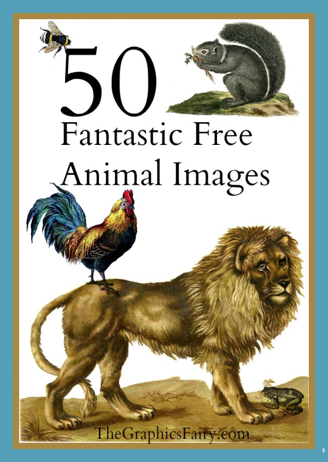 50 Fantastic Animal Images! // The Graphics Fairy