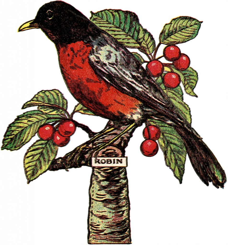 Free Robin Clip Art Image With Cherries The Graphics Fairy