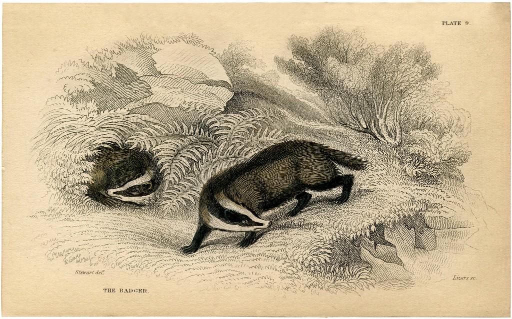 Vintage Badger Image