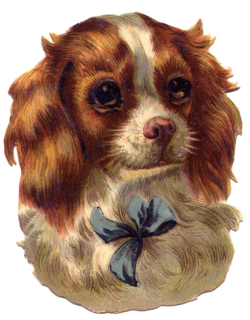 Vintage Dog Image Spaniel