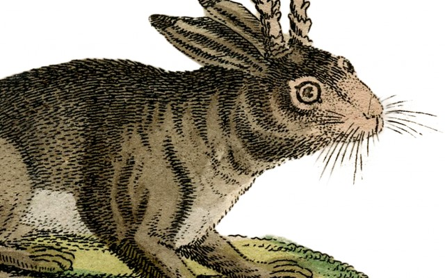 Vintage Rabbit with Horns Image!