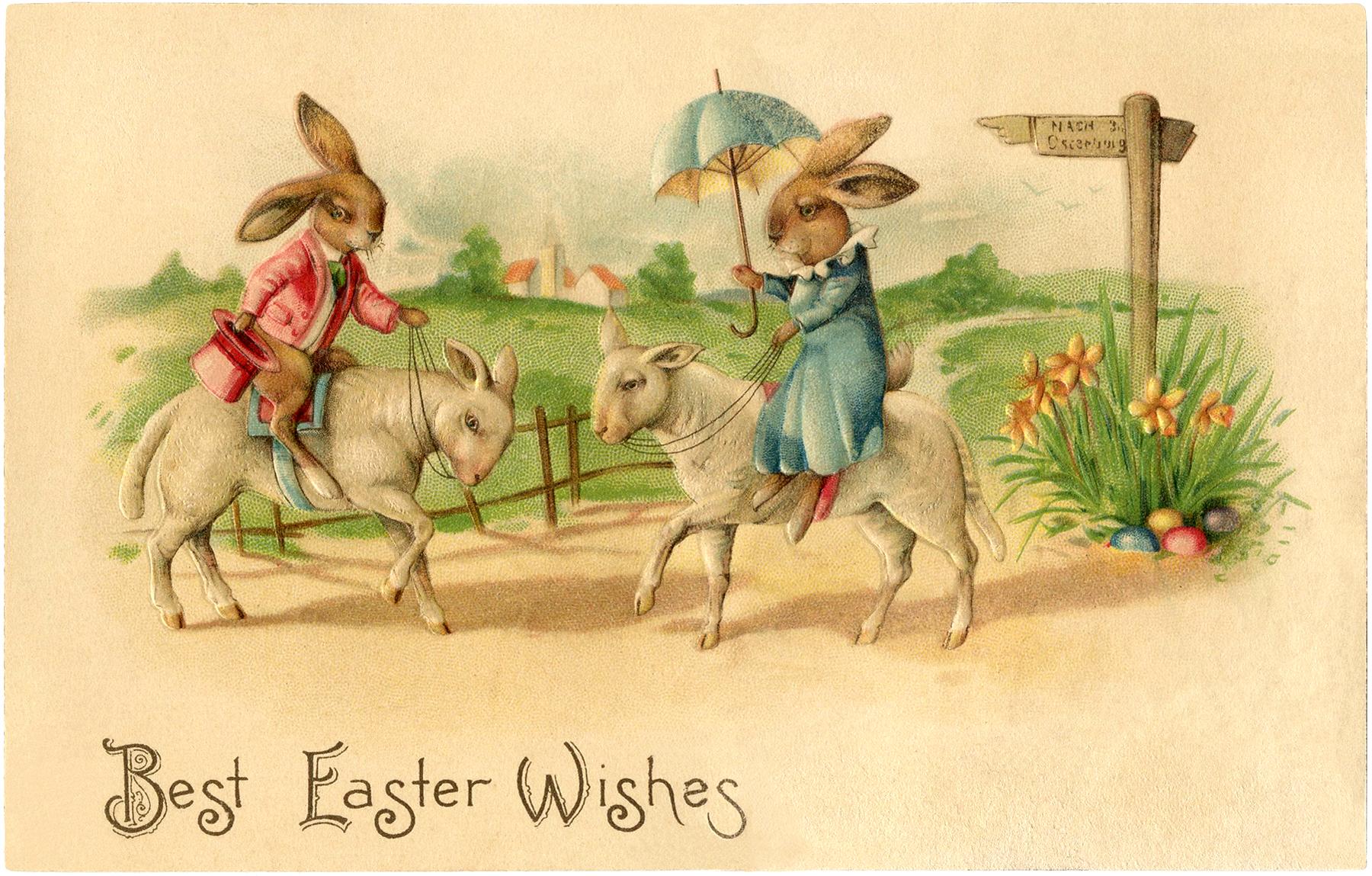 Easter Bunnies Lambs Image