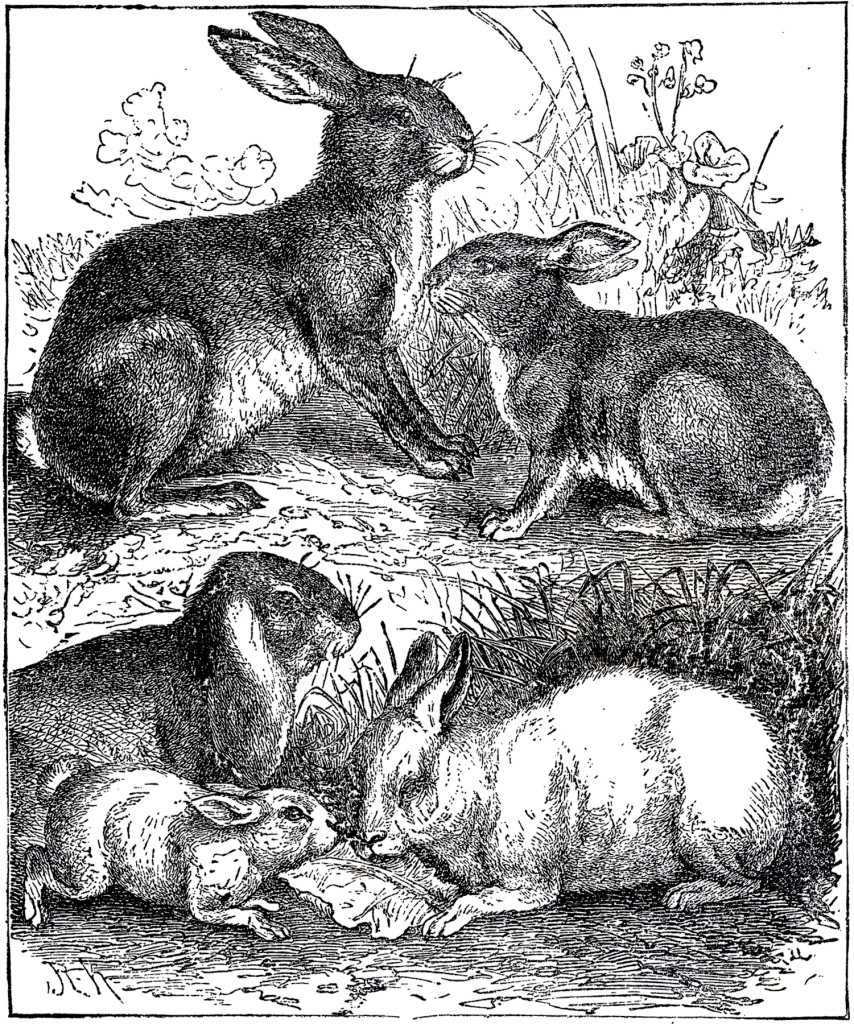 Vintage Rabbits Illustration