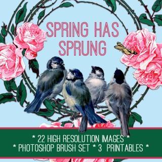 Stunning Spring Flowers & Birds Kit! TGF Premium