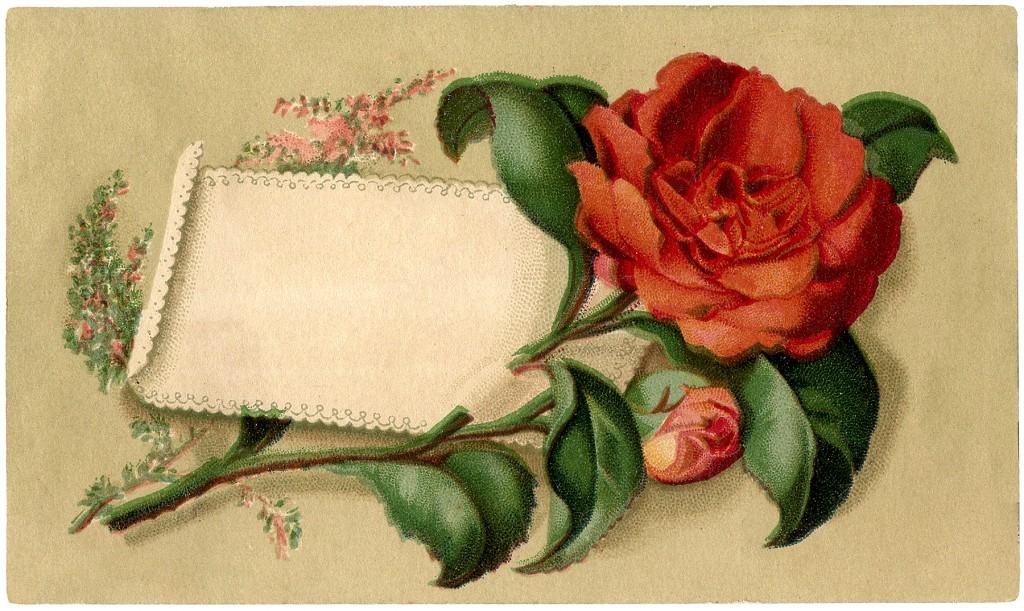 Red Rose Label Image