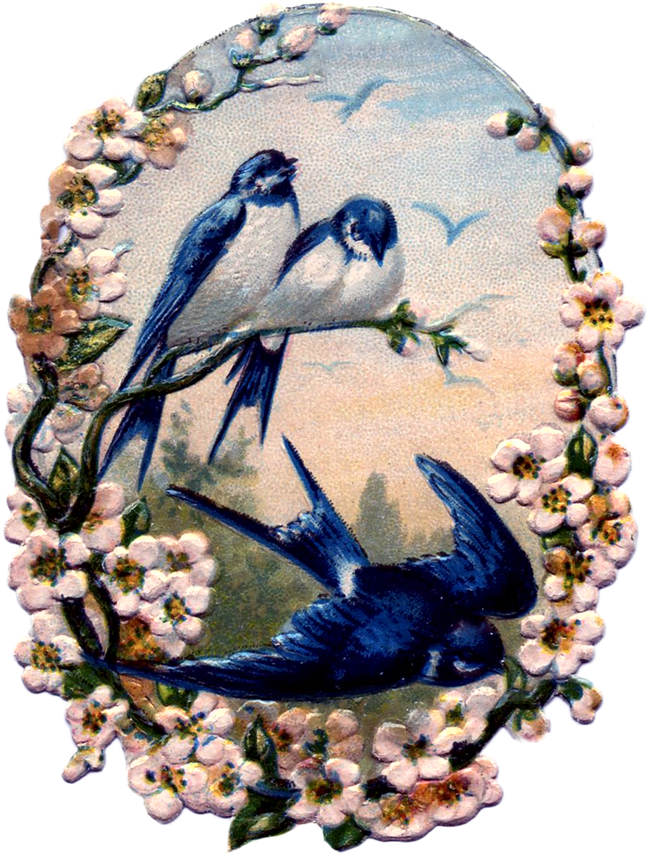 Vintage birds with flowers scrap pretty the graphics for Graphics fairy