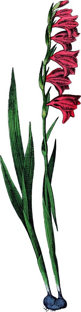 Vintage Flowering Bulb Image