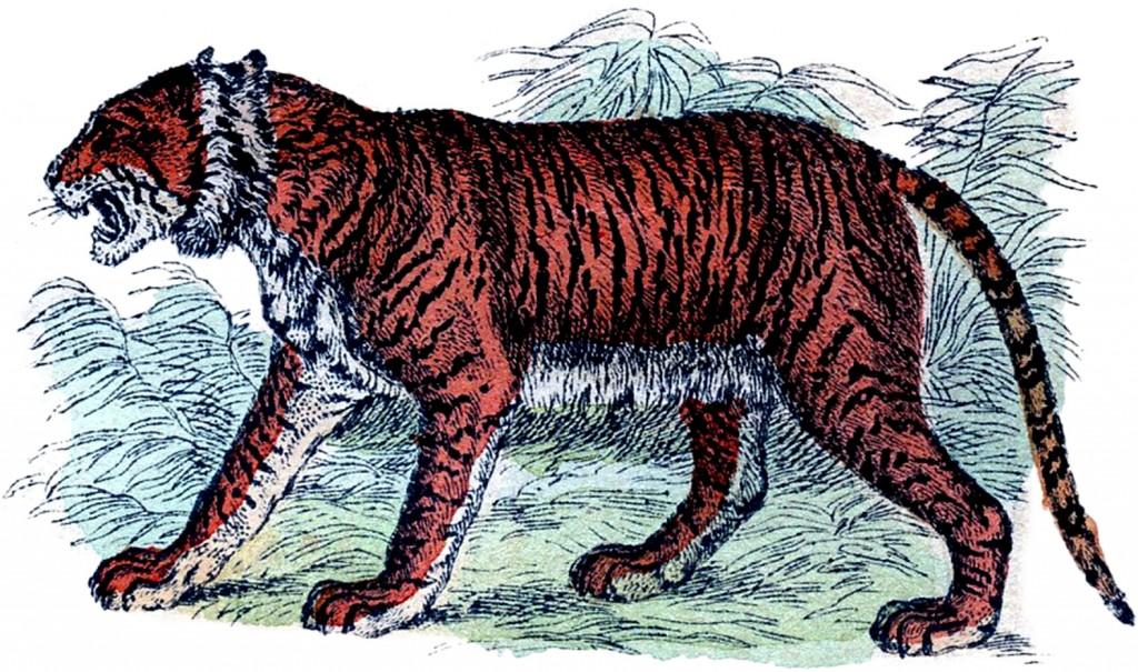 Free Vintage Tiger Clip Art