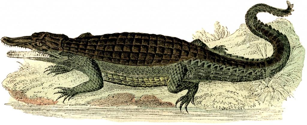 Vintage Alligator Image
