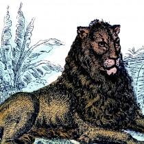 Vintage Primitive Lion Image