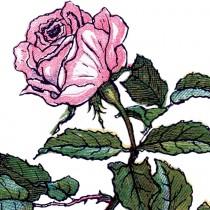 Vintage-Rose-Illustration-thm-GraphicsFairy