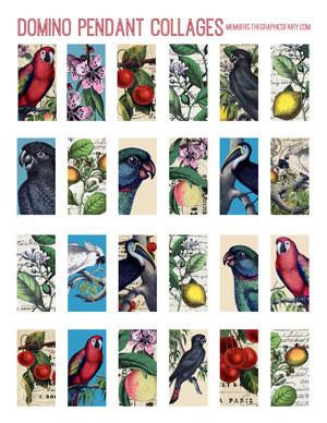 domino-parrot-graphicsfairy