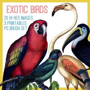 Exotic Birds Kit