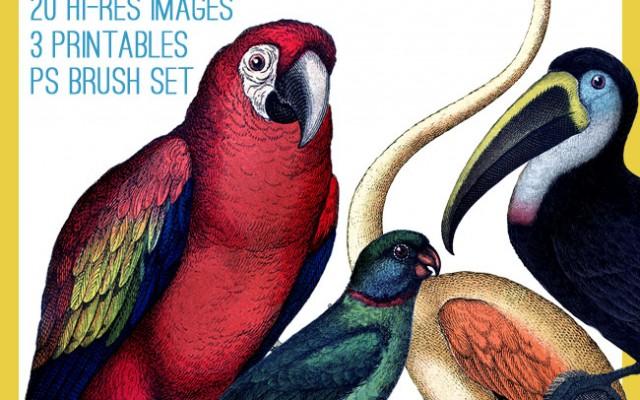 Beautiful Exotic Birds Kit! TGF Premium