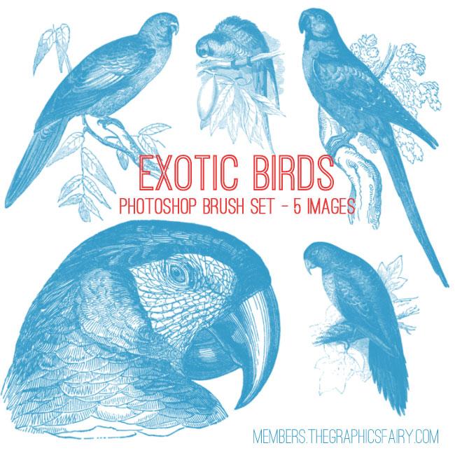 parrots_brush_graphicsfai