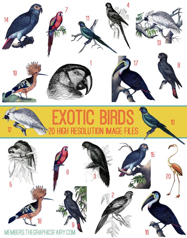 parrots_image_list_graphicsfairy
