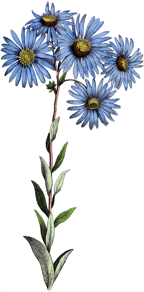 Blue Daisy Flowers Image