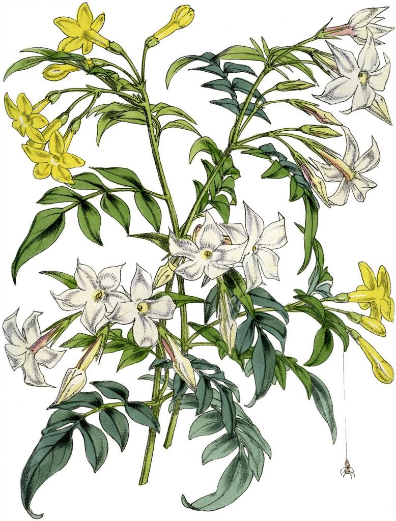 Pretty Botanical Bouquet Image