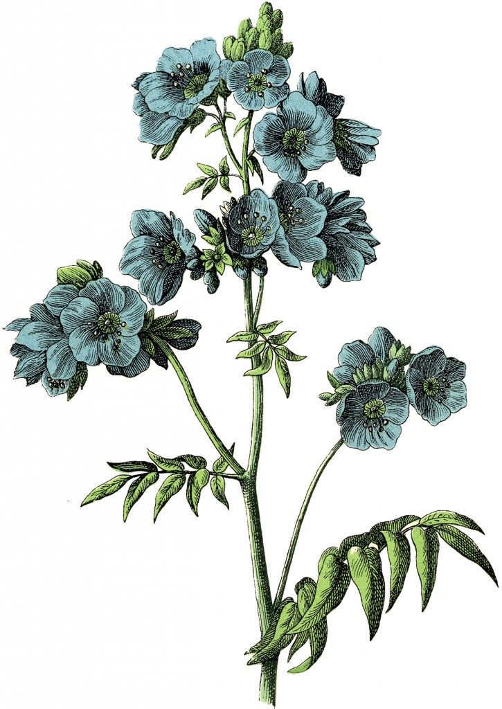 Vintage Blue Botanical Download