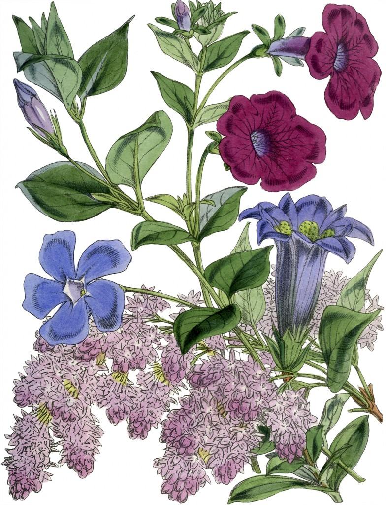 Vintage Botanical Flowers Download