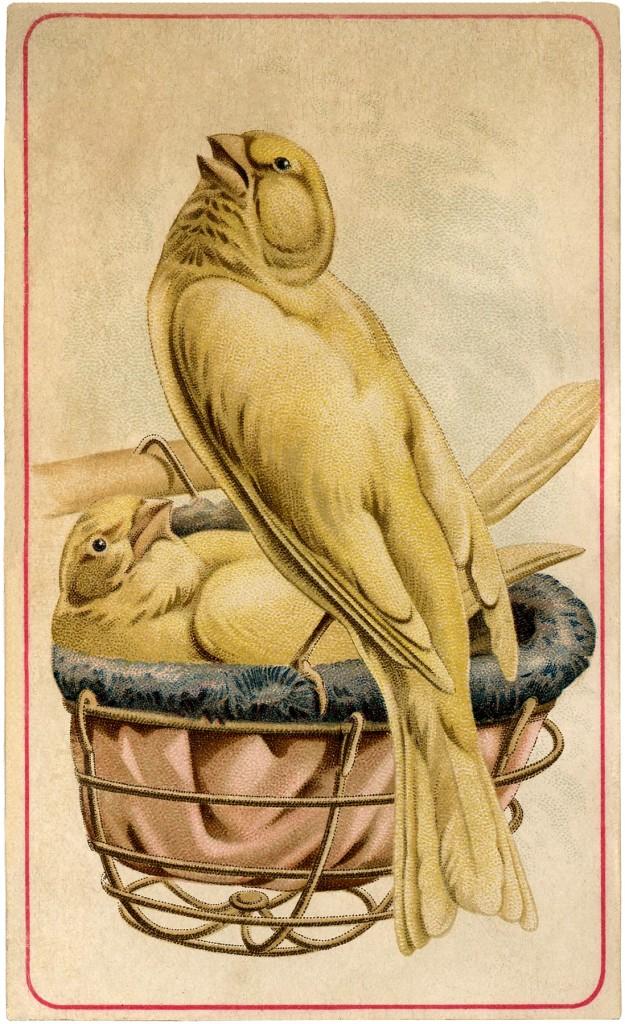 Vintage Canaries Image