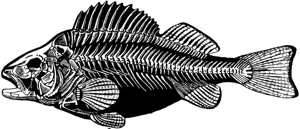 Vintage Fish Skeleton Image