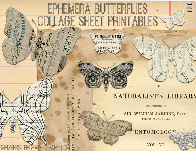 Ephemera Butterflies