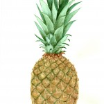 pineapple-watercolor-printable
