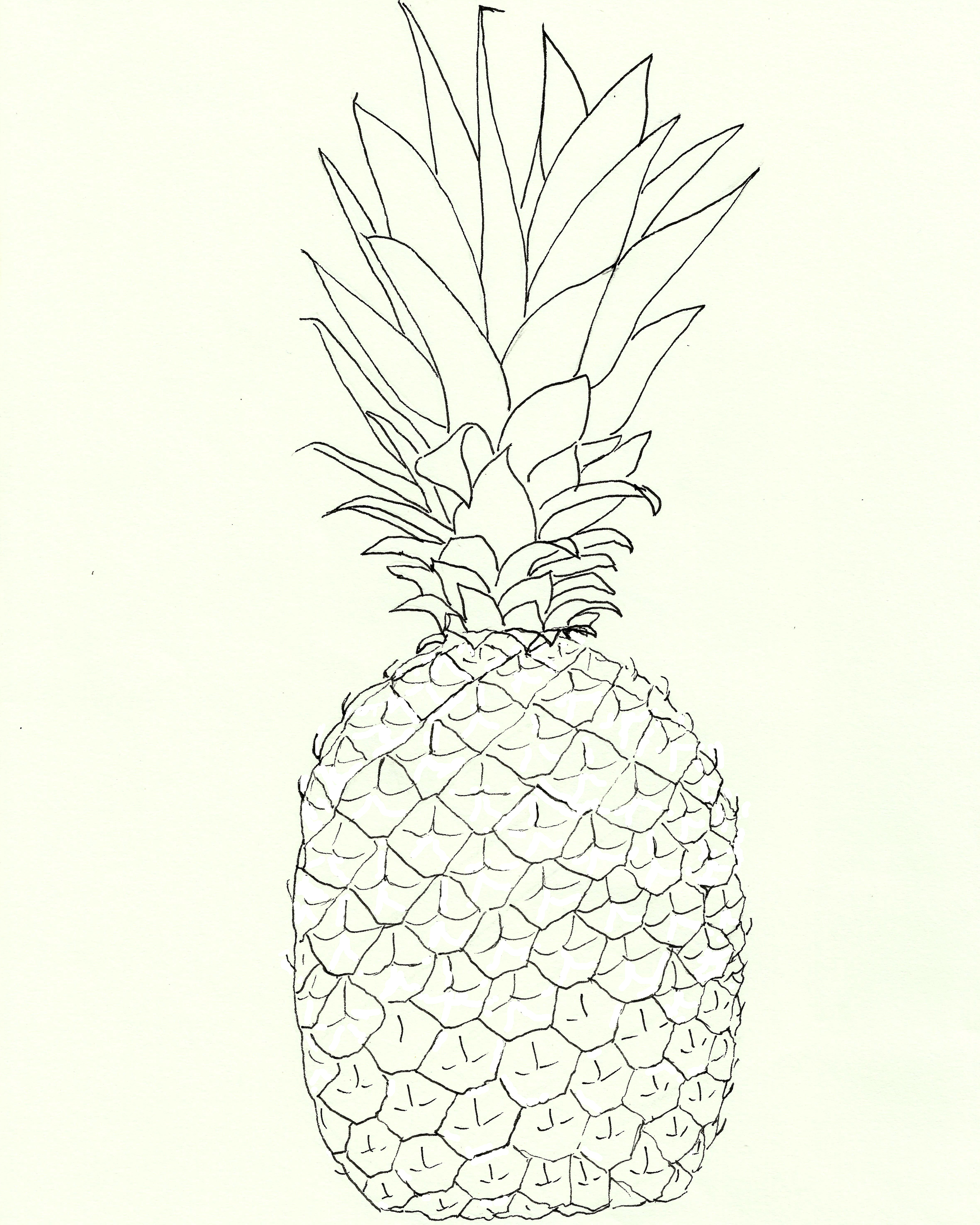 Line Drawing With Watercolor : Free pineapple watercolor printable the graphics fairy