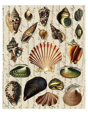 shell_art_graphicsfairy