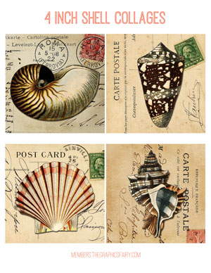 shell_collage_4inch_graphicsfairy