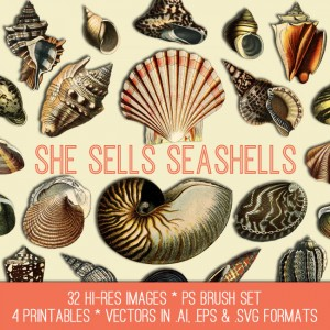 Seashells Image Kit