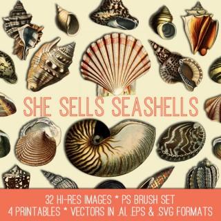 Gorgeous Seashells Image Kit – TGF Premium!